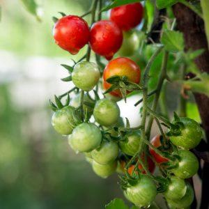 Fotografie alimentara, tomate cherry rosi