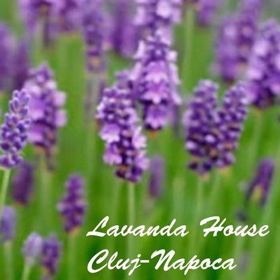 Lavanda House
