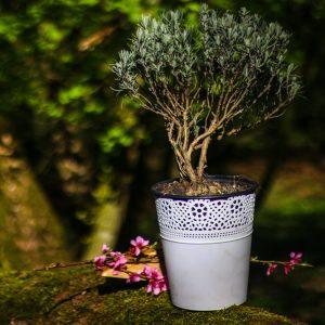 Plante și flori